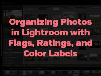 Organizing Photos in Lightroom with Flags, Ratings, and Color Labels