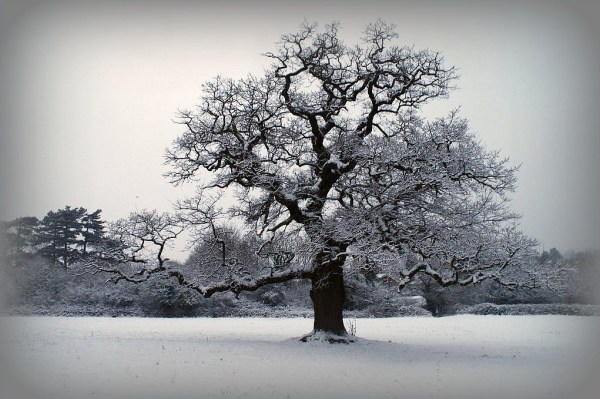 25 Winter Photos for Your Inspiration