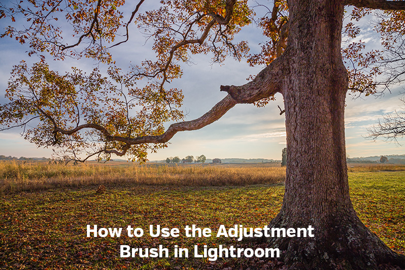 How to Use the Adjustment Brush in Lightroom
