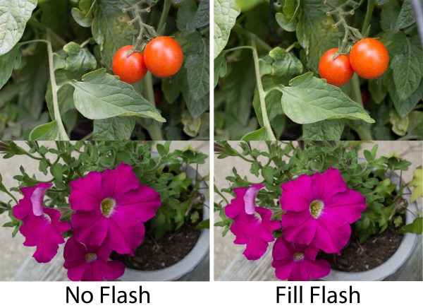 How to Take Better Pictures Using Just the Pop Up Flash