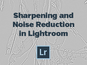 Sharpening and Noise Reduction in Lightroom
